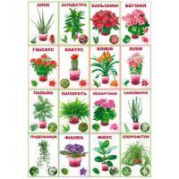 Комплект карточек Комнатные растения