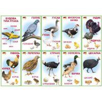 Комплект карточек Птицы домашние