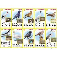 Комплект карточек Птицы перелетные