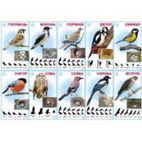 Комплект карточек Птицы зимующие