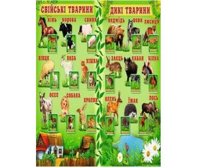 Плакат школьный: Дикие и домашние животные - Издательство Свiт поздоровлень - ISBN 1330052