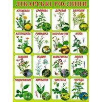 Плакат школьный: Лекарственные растения