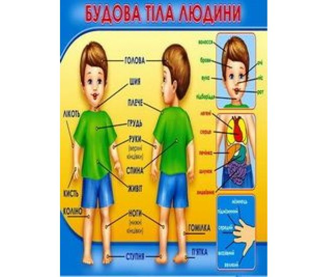 Плакат школьный: Строение тела человека - Издательство Свiт поздоровлень - ISBN 1330042